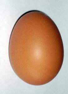 Brown_chicken_egg