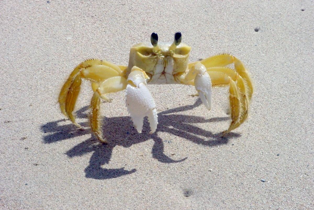 Crab list pic sex