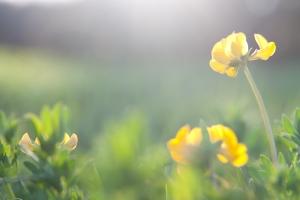 primavera_5552560002