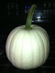white_pumpkin