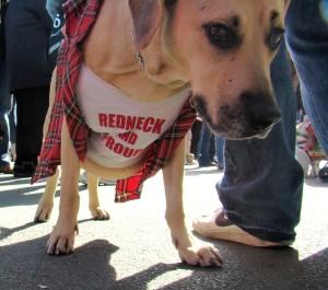 redneck_dog_-1338198146